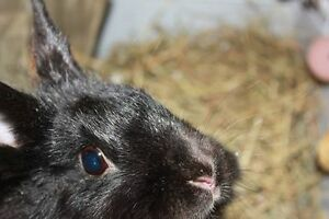 Bunny Available for Pre-Adoption - Anja