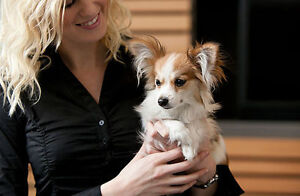 6+ YRS EXPERIENCE IN PET SERVICES–DOG WALKING, LET OUTS & MORE!
