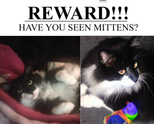 PLEASE HELP US FIND MITTENS Brunswick East Moreland Area Preview