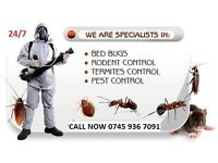 Pest Control Mice Bedbugs Cockroaches Ants Extermination 100% SAME DAY Low Price