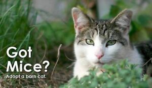 Barn Homes Needed for Cats!!