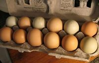 Chicken eggs. I will buy all your chicken eggs.905-515-4307