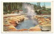 Vintage Yellowstone Postcards