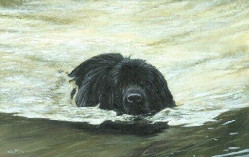 Newfoundland Dog Limited Edition Art Print The Swimmer by Steven Nesbitt*