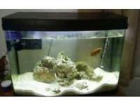 Marine mini reef aquarium