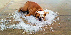 Too hot or humid this summer?
