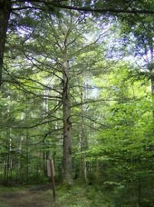 Student looking for an acre of forested land- PEI