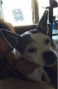 OVLPN - Lost dog in Madoc