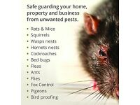 Pest Control Mice Rat Bedbugs Ants Exterminator 100% Same day