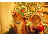Need A Christmas Cat Sitter? - Trainee Vet, CRB & References