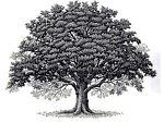 oakgroupsales