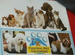 LOOKING FOR PROFESSIONAL GROOMER IN OSHAWA !!!