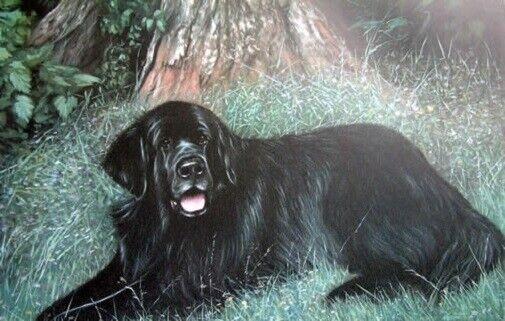 Newfoundland Dog Limited Edition Art Print A Woodland Visitor by Steven Nesbitt*