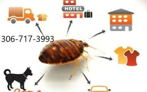 Pest control, Bed Bugs , Cockroach/Roach and Mice control
