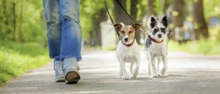 Dog walking/ minding services  Oakleigh Monash Area Preview