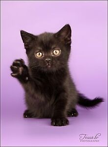 LOOKING FOR BLACK KITTEN!!!!!
