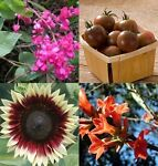 mediterranepflanzen