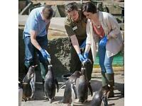 Edinburgh Zoo Keeper Experience Day