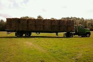 for sale hay