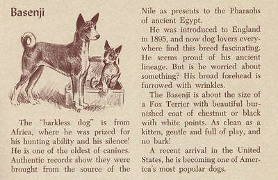 Basenji - Vintage Dog Art Print - 1954 M. Dennis