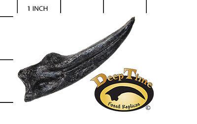 Ornithomimus LG Hand Claw - Cast Replica, Dinosaur Claw (SN15)