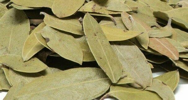 PINGUICA Hojas 3 LBS UVA URSI FRUIT Bearberry Leaves Hierbas Mexicana MAYOREO - $71.99