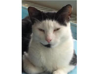 Missing female cat from Edwin Road, Didcot - Now Found