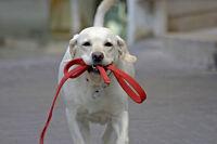 Dog Walker/Trainer in Ahuntsic & Villeray