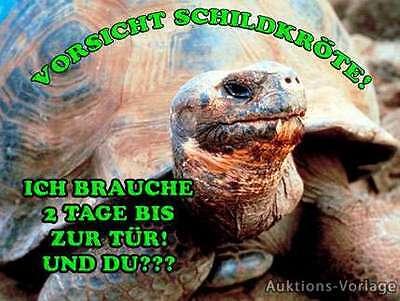 Schildkröte - Metallschild-Aluschild-Warnschild