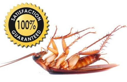 EXPRESS PEST CONTROL TREATMENT FROM $80