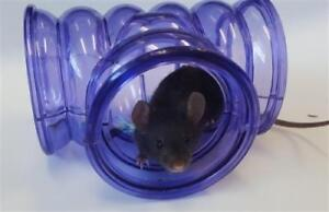 """Baby Male Small & Furry - Mouse: """"Dexter"""""""