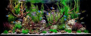 Huge Aquarium Sale!!