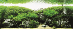 Beginner Aquatic Plants, Snails, Dry Goods! Shipping Available!