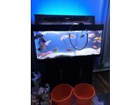 Juwel Rio 180lt fish tank and stand