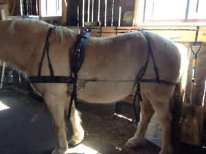 Fancy Leather Horse Harness