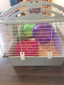 Guinea Pig Cage & Accessories
