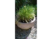 Stone planter for garden with plants