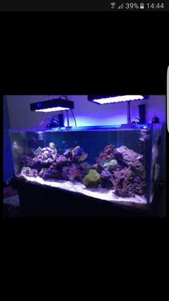 4FT MARINE FISH TANK