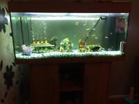Fish tank - tropical
