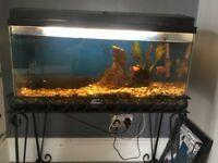 """Fish tank with heater pump accessories and 6 fish approx 3ft x16"""""""
