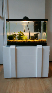 20 gallon aquarium