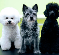 Busy NW Dog grooming Salon is Hiring!!