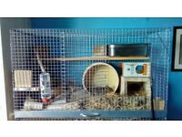 Two lovely Degus with cage and accessories
