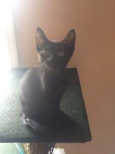 One baby left looking for a home