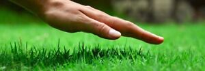 Great deal on Lawn Care 10% off weekly cuts 15% off fall cleanup