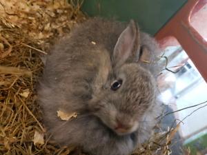 Rabbits Available at Jungle Pets 25% OFF