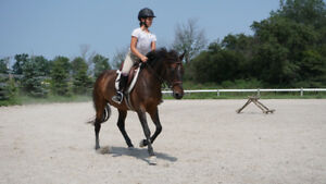 Maisy - 2001 13.2hh pony mare