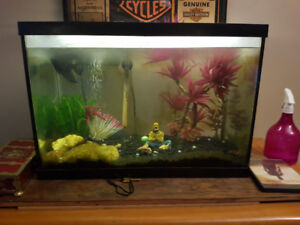 Wicked angel fish for sale