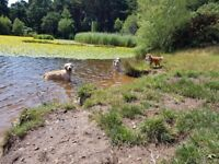 Reliable, Fun & Friendly Dog Walker - Dog Walking, Home Visits (Pet First Aid, DBS Checked, Insured)
