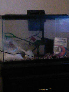 Saltwater fish tank for sale